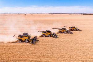 Australia Kekurangan Petani, PNS Ditawari Cuti Berbayar untuk Bantu Panen
