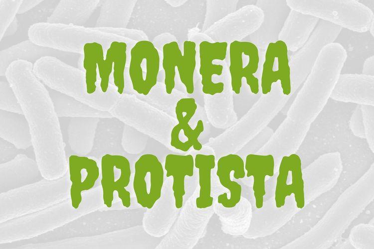 Bedanya Monera dan Protista
