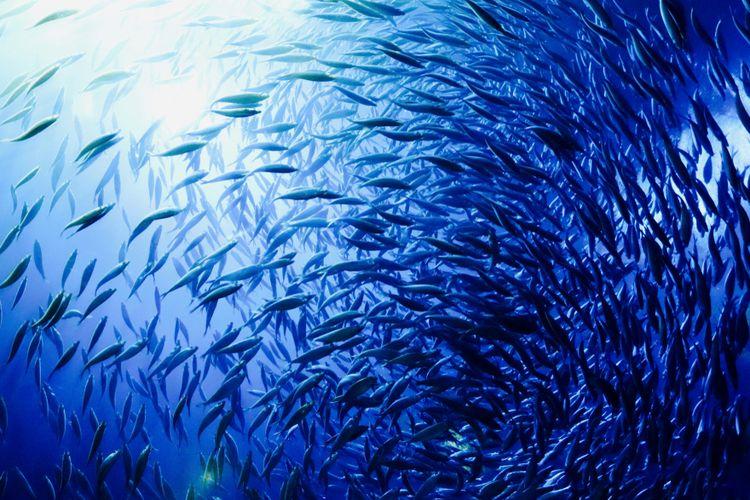 Abbildungen der Ozeane, Meerestiere, Viren in den Ozeanen