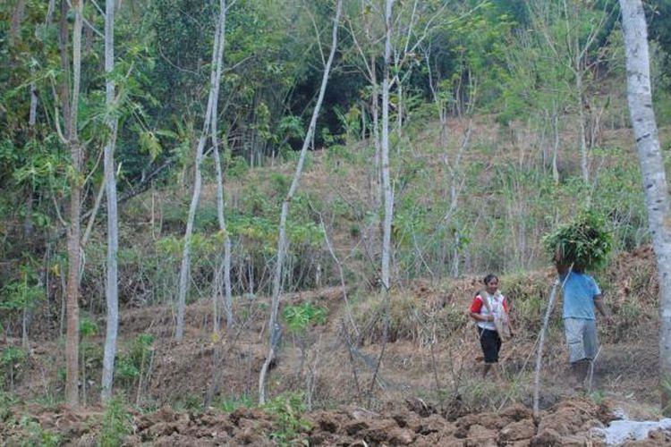 Warga tampak membawa rumput di lereng Bukit Menoreh, kawasan Kecamatan Borobudur, Kabupaten Magelang, Jawa Tengah, Selasa (8/9/2015).