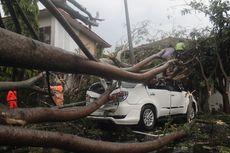 Hujan Badai Landa Cianjur, Pohon Tumbang Timpa Kendaraan