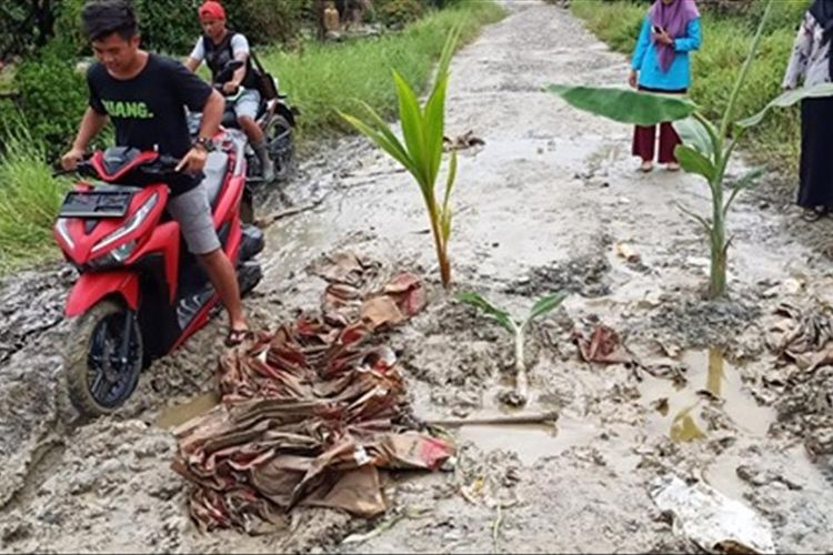 Warga Dusun Rampoang, Desa Takkala, Kecamatan Malangke, Kabupaten Luwu Utara menanami jalan mereka dengan tanaman Pisang dan Kelapa sebagai bentuk protes kepada pemerintah agar jalan tersebut diperbaiki, Jumat (05/07/2019)