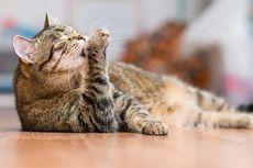 Video Viral Pria Bantai Kucing, Mengaku Makan Daging Kucing untuk Obat Darah Tinggi