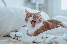 Rusia Kembangkan Vaksin Covid-19 untuk Hewan, Penerima Pertama Seekor Kucing