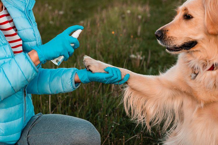 Ilustrasi anjing memakai hand sanitizer