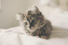 Catat, Ini Jenis Obat Manusia yang Beracun bagi Kucing dan Anjing