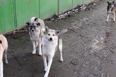 Bucharest Gelar Referendum soal Nasib Anjing Liar