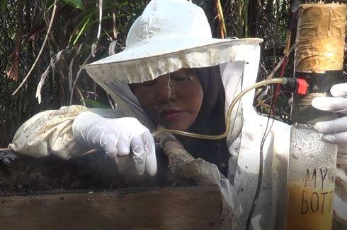 Budidaya Lebah di Hutan Lindung Belitung Timur Hasilkan 4 Ton Madu Kelulut Per Bulan