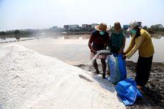 Asa Petani Garam di Surabaya, Menjaga Mutu demi Hasilkan Produk Berkualitas
