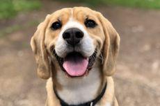 4 Cara Menghilangkan Bau Anjing di Dalam Rumah