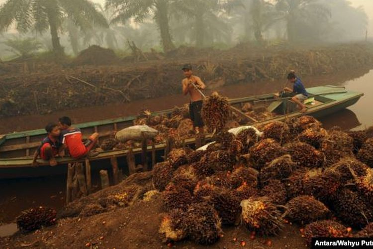 Workers at a palm oil plantation in Jambi province's Gambut Jaya regency load the commodity on boats