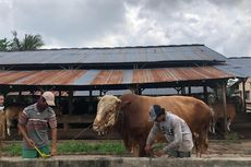 Imbas Covid-19, Penjualan Hewan Kurban di Palembang Menurun