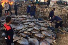 14 Ton Ikan Berformalin Ditemukan di Pelabuhan Muara Baru dan Muara Angke