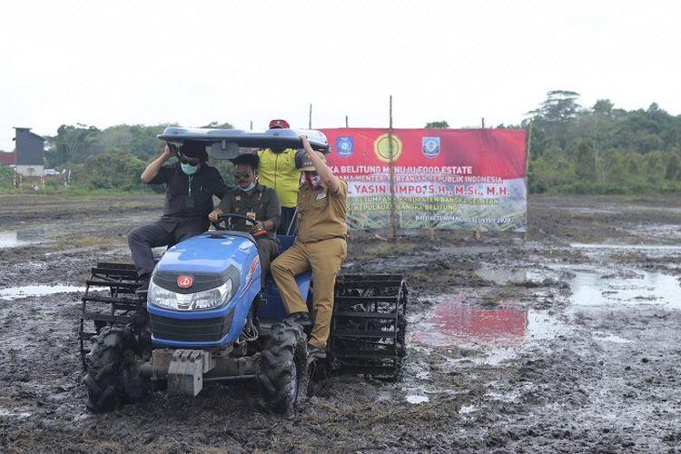 Penanaman padi pertama, di area persawahan Desa Batu Betumpang, Kecamatan Pulau Besar, Bangka Selatan, Selasa (25/8/2020).