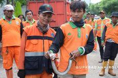 Setelah 5 Jam Mencari, Petugas Damkar Gagal Tangkap Ular Kobra yang Resahkan Warga Ciracas