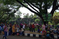 Murah dan Mudah Transportasi, Ragunan Jadi Pilihan Warga Rekreasi Liburan Natal