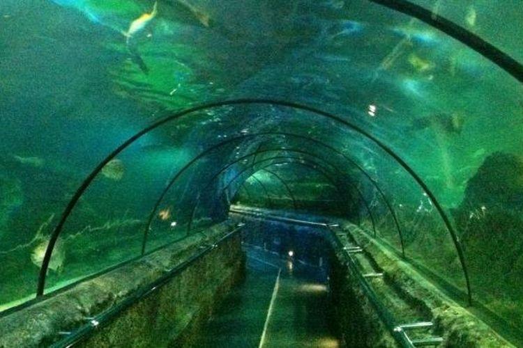 Main Tank (akuarium utama) yang ada di Seaworld Ancol, Jakarta, Jumat (10/7/2015). Akuarium utama ini berisi ikan hiu, pari, kuwe, kerapu, dan jenis ikan-ikan lain.