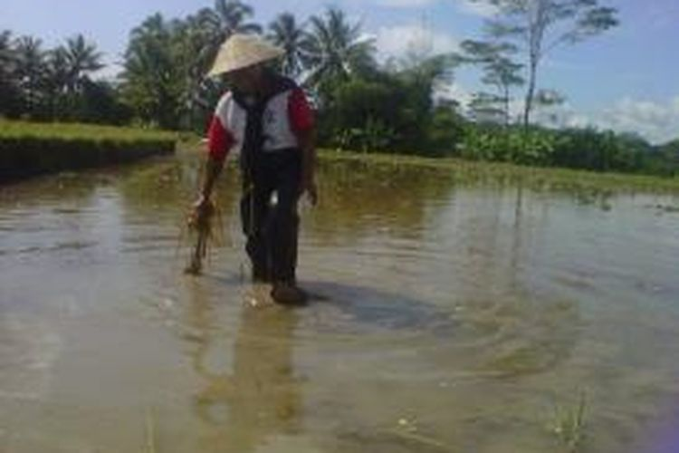 Seorang petani mencoba memakai Celpa