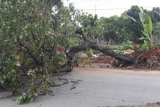 Warga Jakarta Diminta Jauhi Pohon Saat Angin Kencang