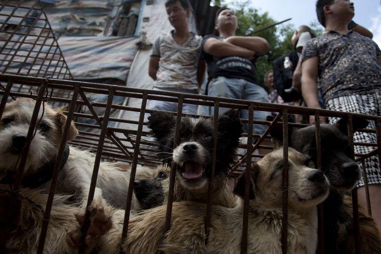 Para pedagang yang menjual daging anjing tengah menunggu pelanggan di pasar Yulin, Provinsi Guangxi, China, pada 21 Juni 2015. Kota itu setiap tahunnya menggelar festival daging anjing, yang kerap mendapat penolakan dari aktivis penyayang binatang.