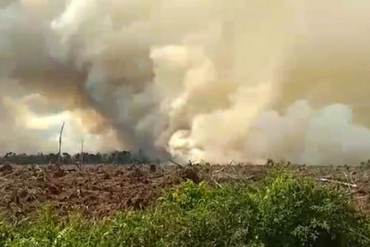 Asap tebal membumbung tinggi ke udara di lokasi karhutla di Kabupaten Pelalawan, Riau, Minggu (28/6/2020). dok. istimewa
