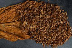 Revisi PP 109/2012 Dinilai Ancam Industri Tembakau dan Penerimaan Negara