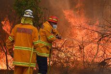 Kunci Penanganan Kebakaran Hutan dan Lahan, BNPB: Pencegahan