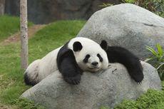5 Warisan Dunia di Sichuan China yang Menarik Dikunjungi