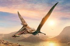 Dinosaurus Terbang dari Australia Ini Diklaim aebagai Pterosaurus Terbesar