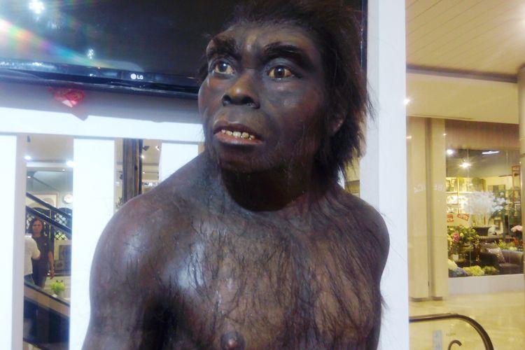 Homo erectus, manusia purba di Sangiran yang ditampilkan Balai Pelestarian Situs Manusia Purba Sangiran di Medan, Kamis (19/10/2017)