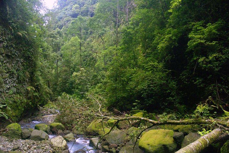 Taman Wisata Alam Sibolangit - Salah satu area di TWA Sibolangit, Sumatera Utara.