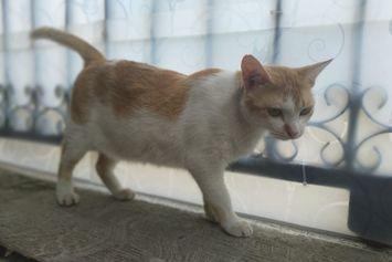 Kucing Berkutu Penting untuk Segera Diobati, Ini Sebabnya