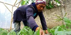 Keluar dari Dunia Hitam, Maman Dapatkan Ketenangan Hidup dengan Menjadi Petani