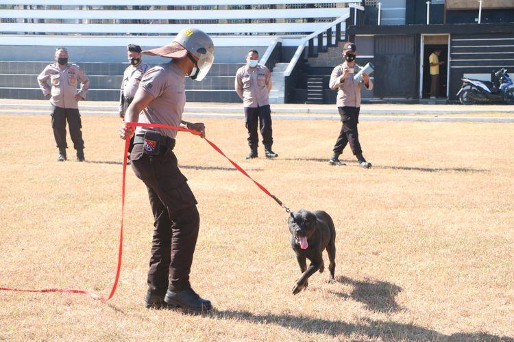 Latihan anjing pelacak yang akan diterjunkan ke Kabupaten Sabu Raijua untuk pengamanan pemungutan suara ulang