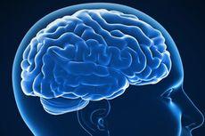 Perbedaan Sebenarnya Otak Kiri dan Otak Kanan