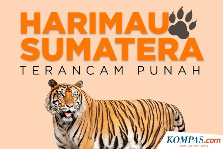 5100 Cara Gambar Hewan Harimau HD Terbaru