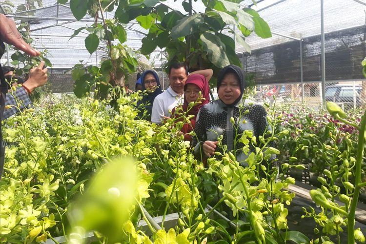 Wali Kota Surabaya Tri Rismaharini saat mengunjungi kebun bunga anggrek di kawasan eks lokalisasi di Jalan Sememi Jaya II, Kecamatan Tandes, Surabaya, Sabtu (27/7/2019).