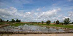 Pemerintah akan Beri Kompensasi Rp 6 Juta kepada Petani Terdampak Banjir