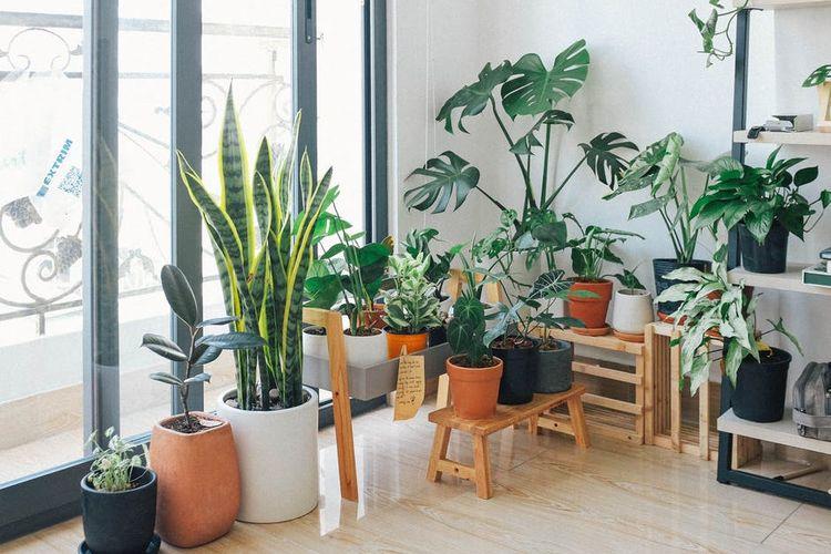 Ilustrasi memelihara tanaman hias.