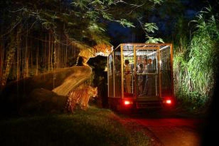 Night Safari di Bali Safari & Marine Park, Gianyar, Bali