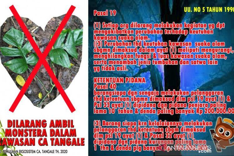 Peringatan yang dipasang BKSDA terkait perambahan monstera di Cagar Alam Tangale Gorontalo.