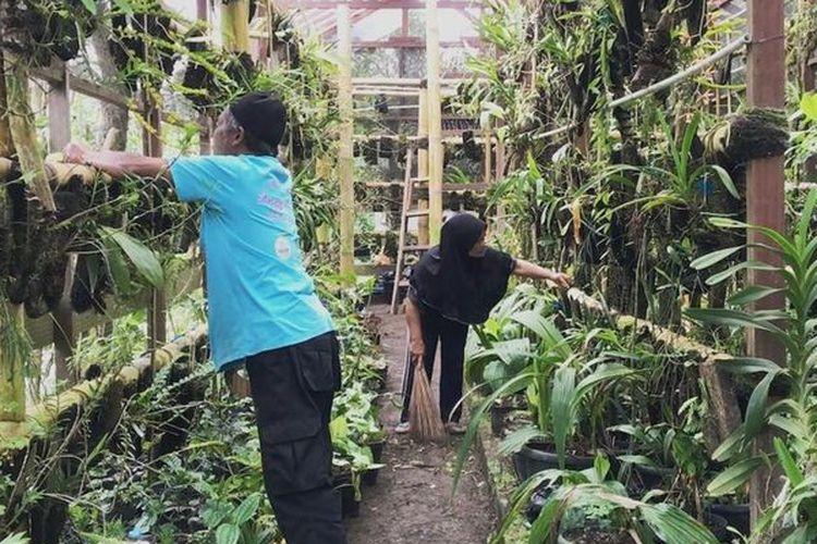 Di halaman rumah Musimin, yang hanya berjarak sekitar 6 kilometer dari puncak Gunung Merapi, terdapat rumah kaca berukuran sekitar 6x15 meter sebagai tempat penangkaran anggrek.