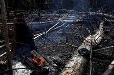 Kebakaran Hutan Amazon Akibat Deforestasi, Ini Efeknya secara Global