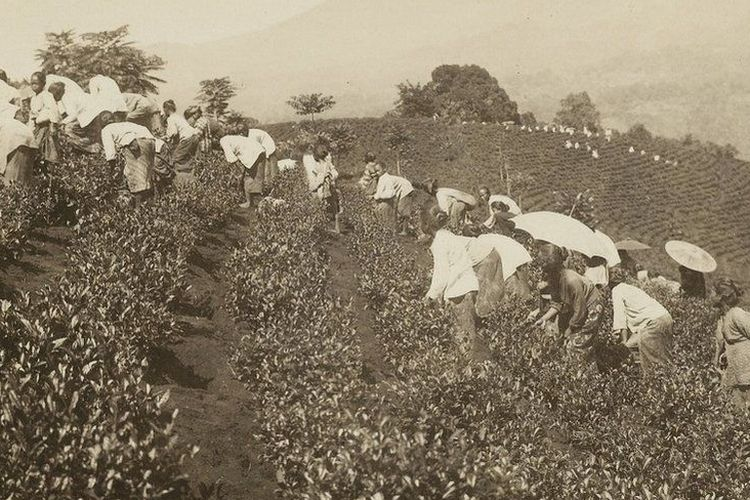Sejumlah literatur mencatat jumlah perkebunan meningkat di Priangan setelah kereta api hadir sebagai moda transportasi. Pada tahun 1902 di seluruh Hindia Belanda terdapat lebih kurang 100 perkebunan teh; 81 di antaranya terletak di Jawa Barat.