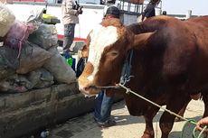 Dinas KPKP Kirim Petugas untuk Cek Hewan Kurban di Kepulauan Seribu
