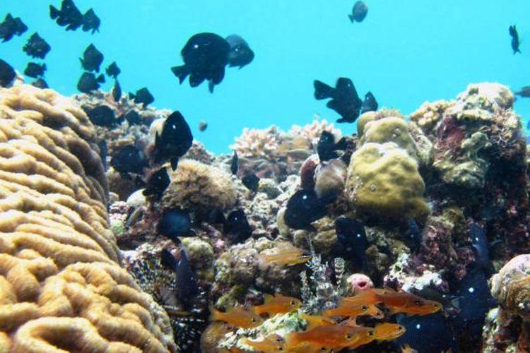Terumbu karang di Pulau Buton, Sulawesi Tenggara, tak kalah menarik dengan Wakatobi. Laut Teluk Pasarwajo, Kabupaten Buton ini mempunyai 10 spot diving yang indah. Terlihat terumbu karang yang masih terawat baik dipenuhi dengan berbagai jenis ikan.