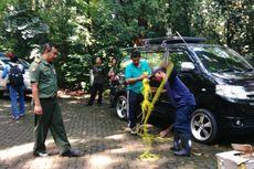 Pengunjung Diimbau Tak Berinteraksi dengan Monyet di Jambore Cibubur