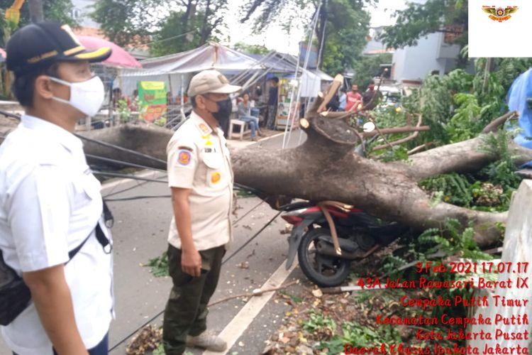 Sebuah pohon berukuran besar dengan jenis Flamboyan tumbang di Jalan Rawasari IX RT 11 RW 01, Kelurahan Cempaka Putih Timur, Jakarta Pusat, Rabu (3/1/2021) sore.