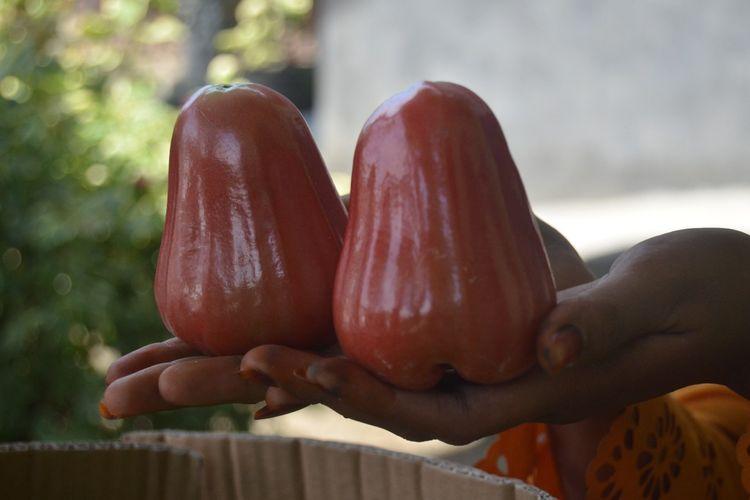 Buah jambu air merah kesuma hasil panen dari petani di Desa Teluk, Kecamatan Secanggang, Langkat. Buah ini disebut memiliki rasa lebih manis dari madu deli.