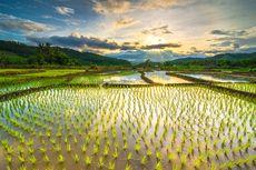 Kementan Desak Pemda Terbitkan Perda Lahan Pertanian Pangan Berkelanjutan